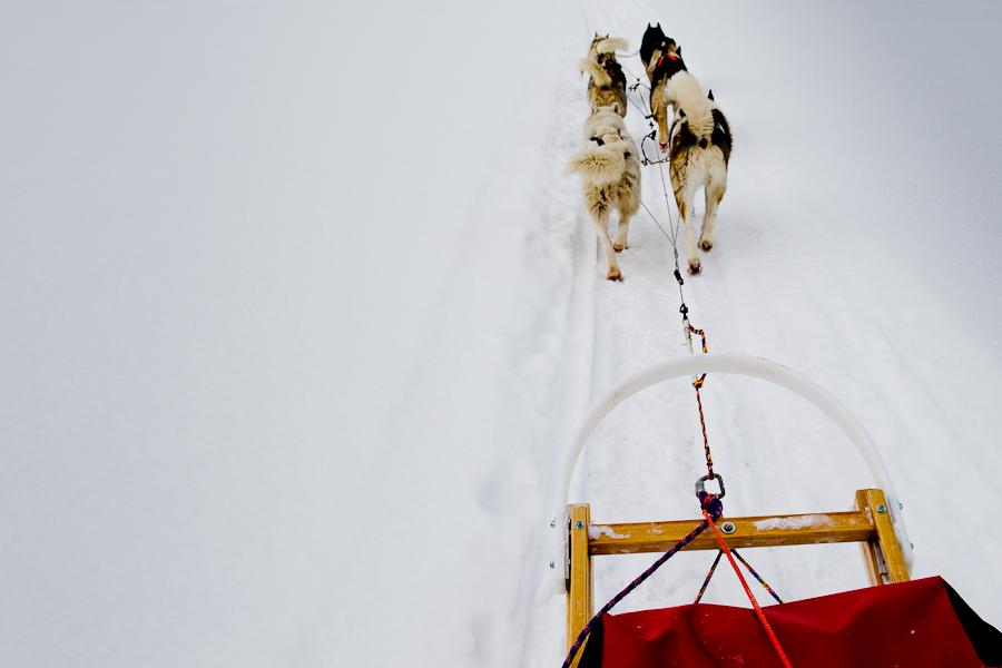Balade en traineau à chiens, Mont-Laurier, Février 2012 (© Sébastien Lavallée)