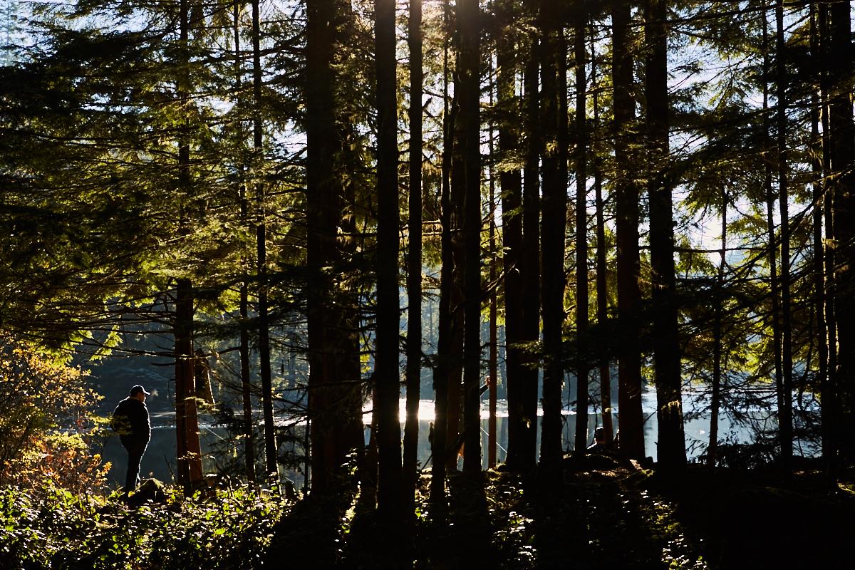 Lynn Canyon Park, Vancouver, début décembre 2015 (© Sébastien Lavallée)